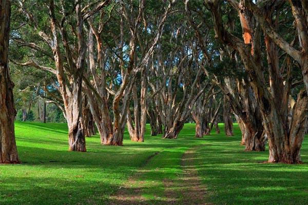 Best sydney wellness spots, Centennial Park